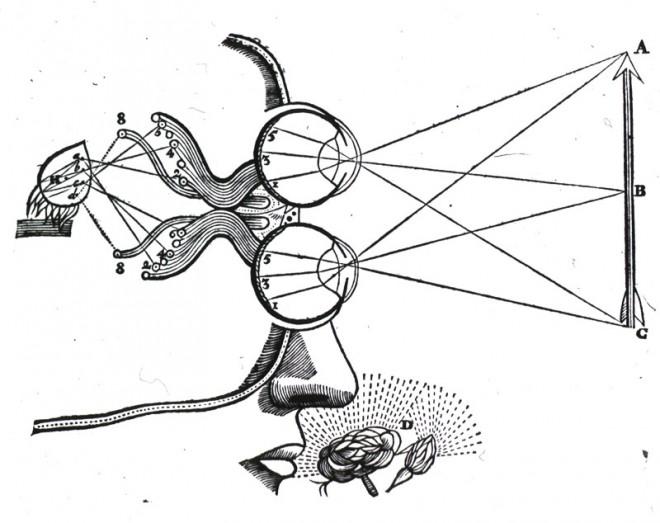 Medical-Diagram-Descartes-Vision-and-visual-perception_sm