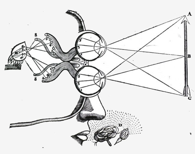 Medical-Diagram-Descartes-Vision-and-visual-perception_smSFNweb