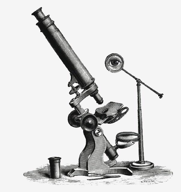 Microscope-image-sfnweb